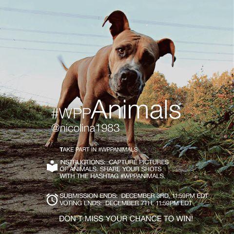 animals contest photography