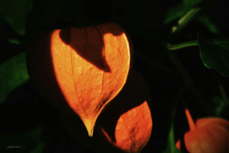 #colorful #nature #photography #autumn   #macro
