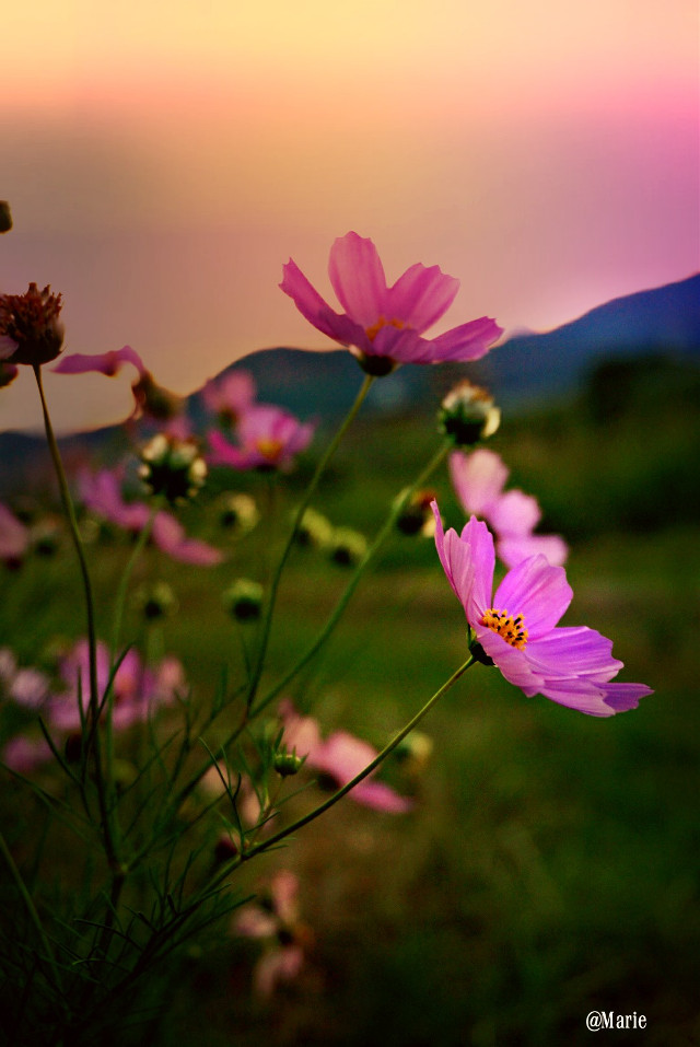The best view comes after the hardest climb ....   #landscape  #nature#photography   #autumn