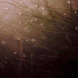 fog foggy macro drops rain