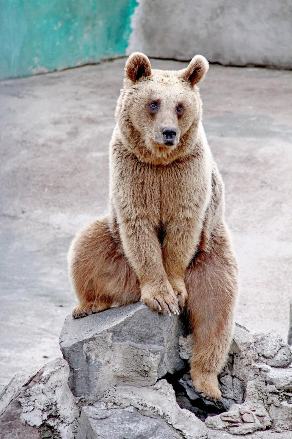 picture of a bear  #freetoedi
