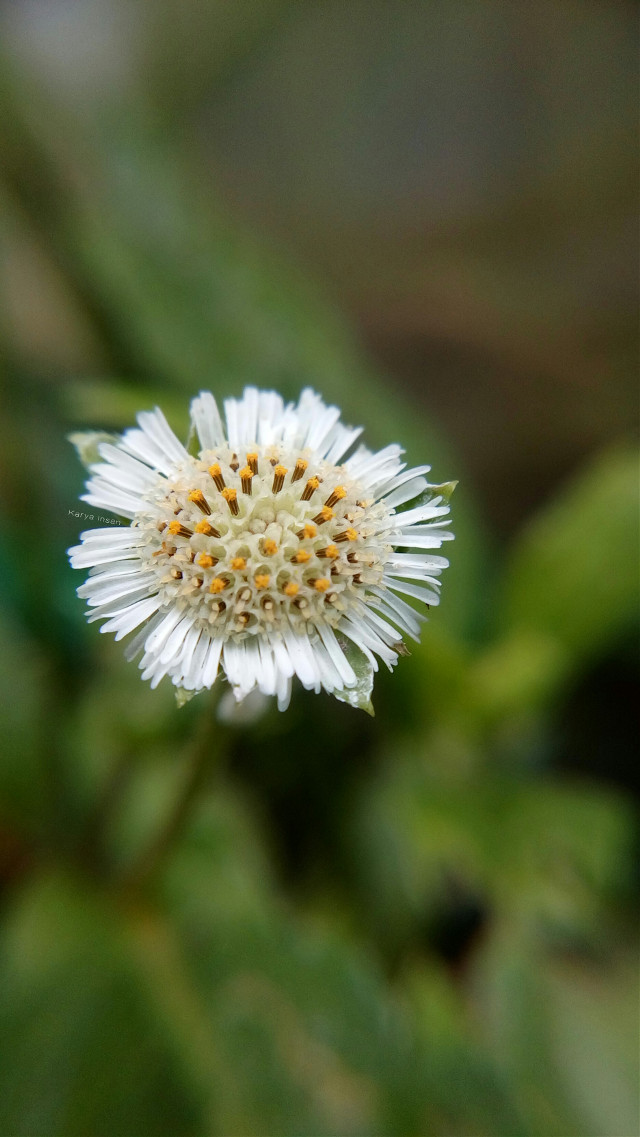 #flower #hdr #photography #macro #macrophotography