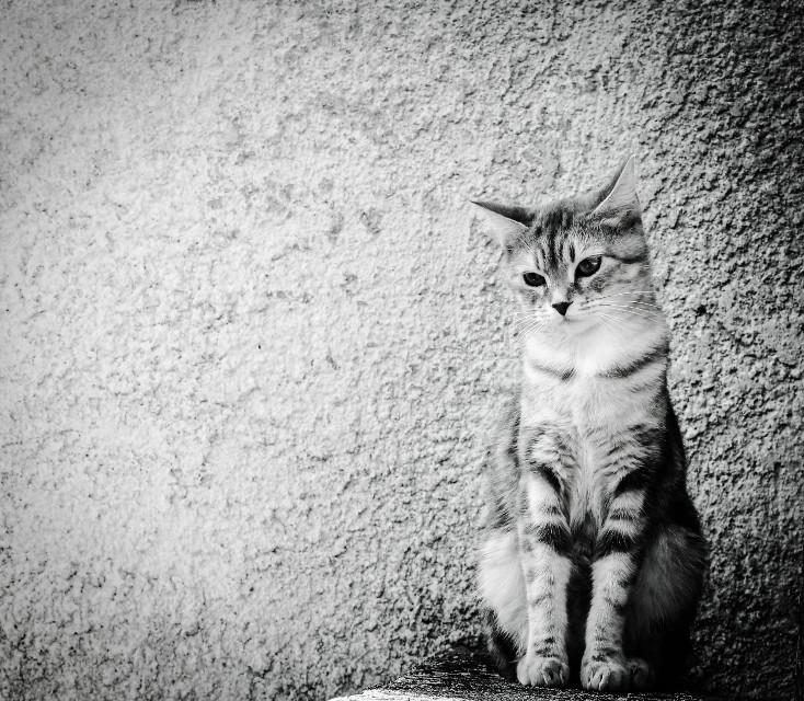 #cat#love #blackandwhite