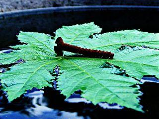closeup highcontrast photography leaf nature