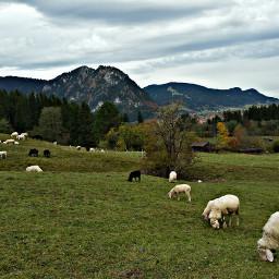 petsandanimals nature autumn mountains bavarian