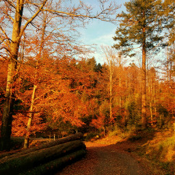 photography nature autumn wood