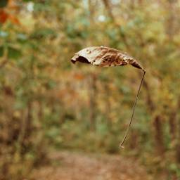 path fall leaf photography nature straightfromthecamera autumn