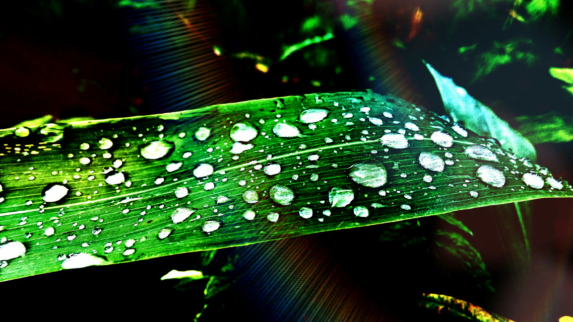 #highcontrast #emotions #nature #photography #rain #summer
