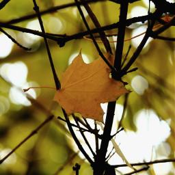 nature emotions a autumn