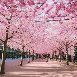 nature_beauty