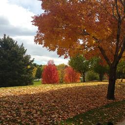 nature autumn fall fallcolors oakleaves