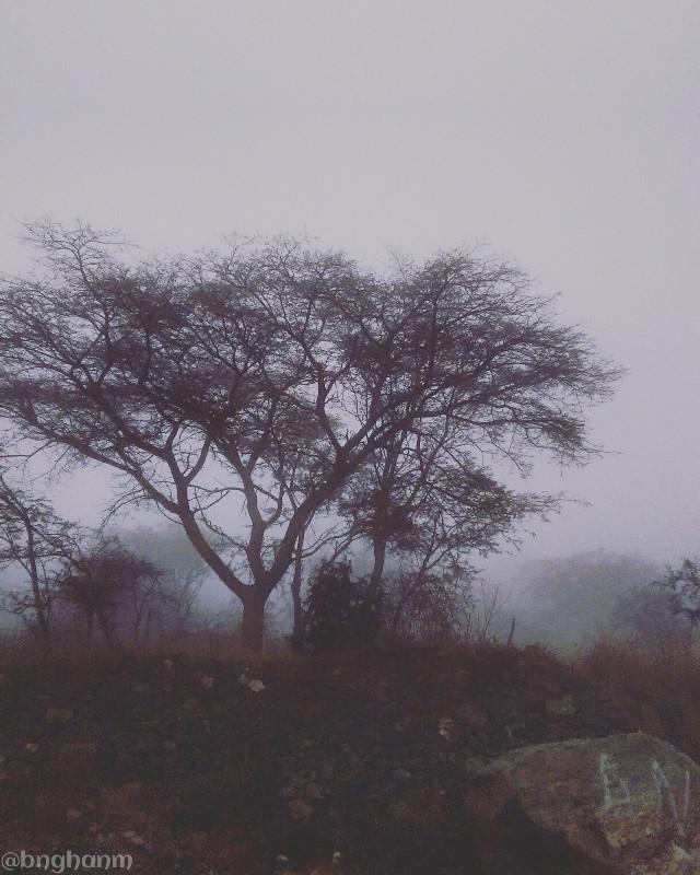 Foggy weather today جو ضباب لهذا اليوم #fall