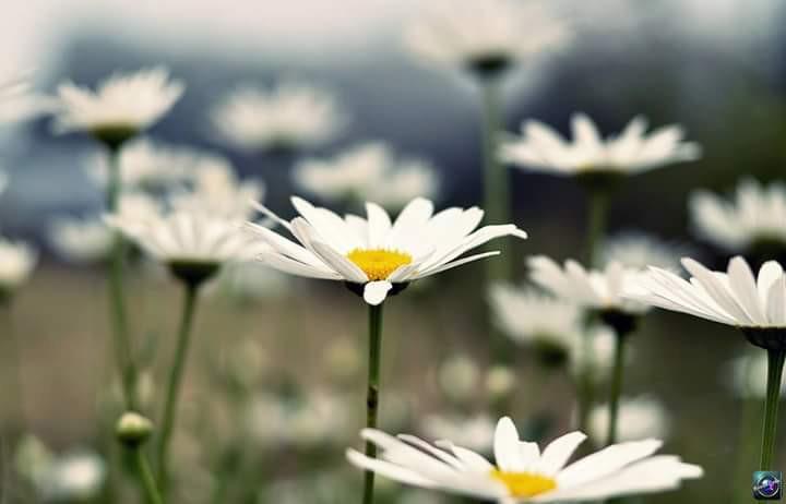 #turkey #turkey #sun #light #sunny #istanbul #travel #summer #spring #photography #nature #flower #beach #colorsplash #colorsplash #hdr #cute #emotions #love #rain