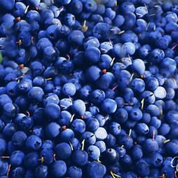 berries blue freetoedit dpcfreetoedit