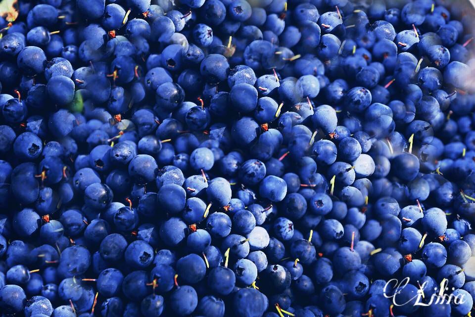 #berries #blue #freetoedit #dpcfreetoedit
