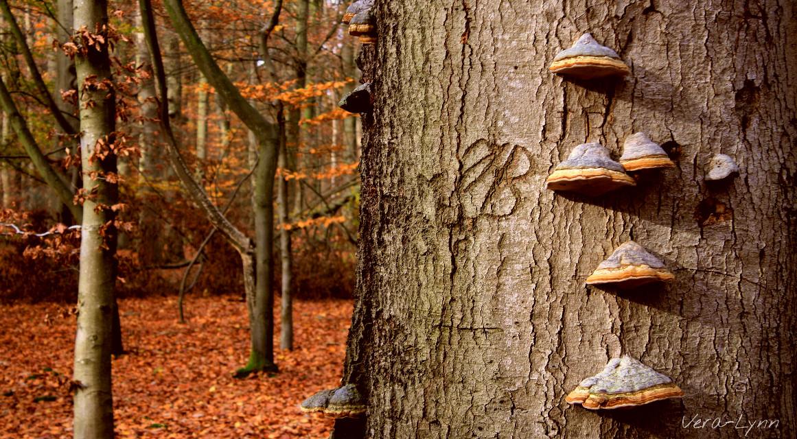 #autumn #fall #scenery #landscape #nature #outdoors #photography #color #colorful #tree  #mushroom #mushrooms  #initials  #carving #j #b #nearandfar