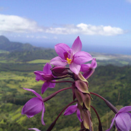 purple nature freetoedit
