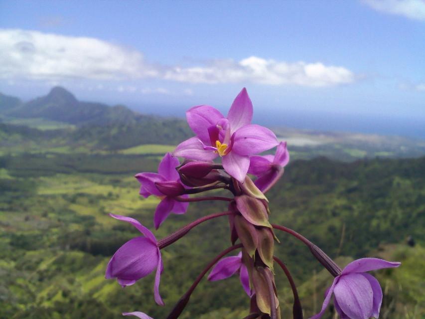 #purple #nature #freetoedit