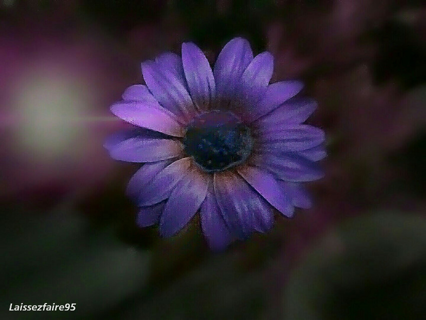 Good night dear friends sleep well  #purple #colorful #flower #nature #photography #hdr