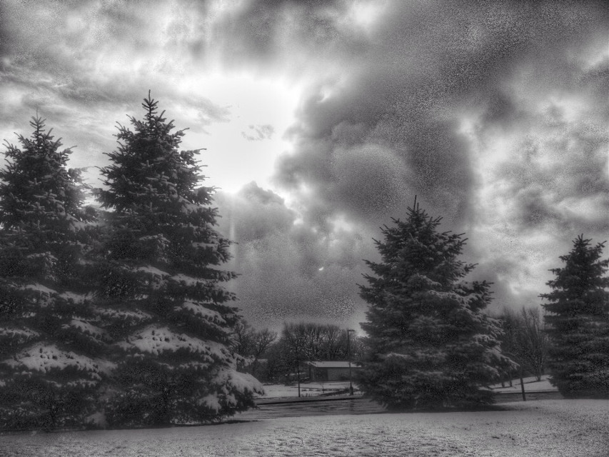 #black&white #landscape #snowscape #snow #winter #trees