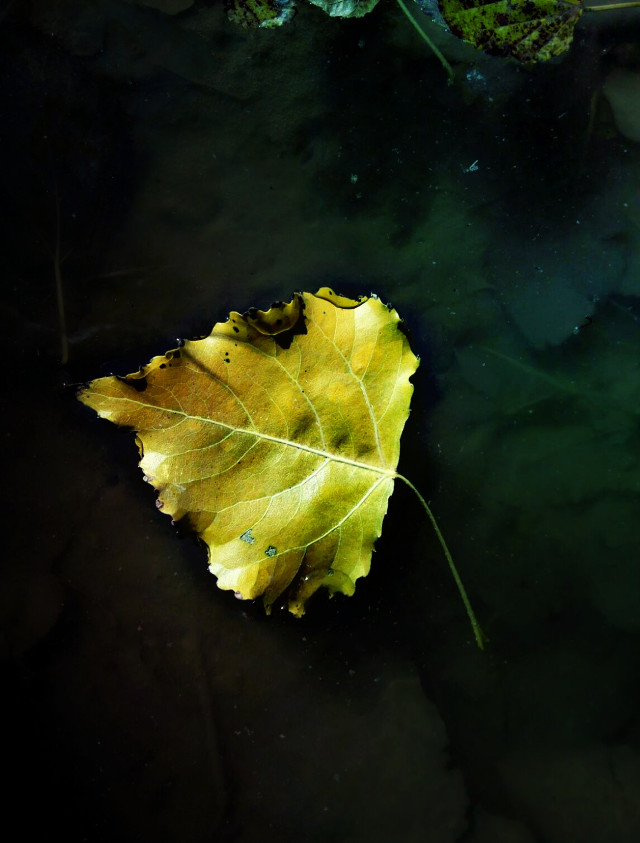 Good morning my friends !!! #fall #leaf #nature #gold