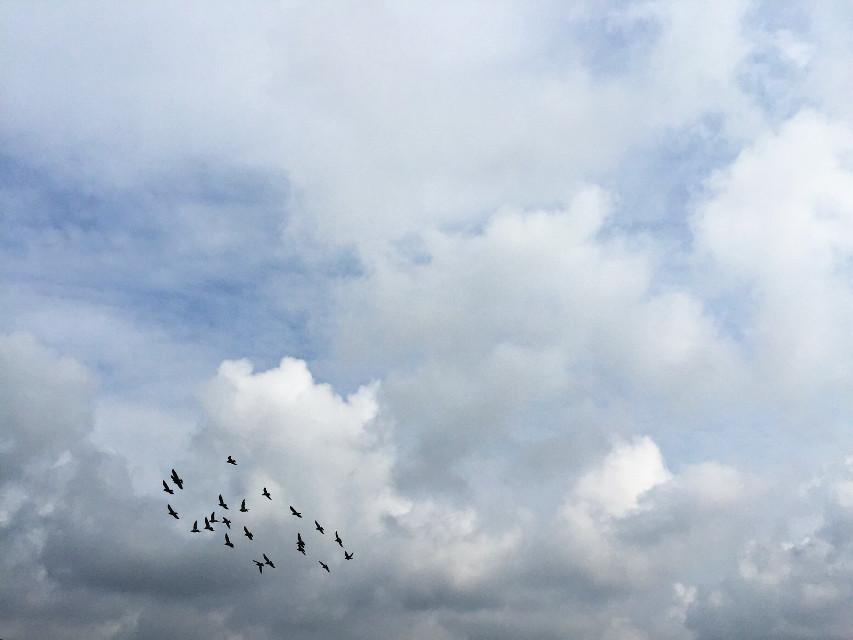 #birdsflyingoverhead