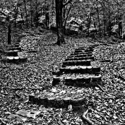 von blackandwhite hdr photography nature