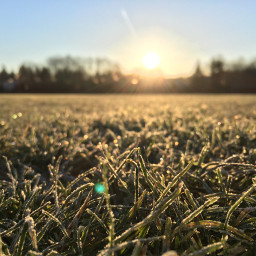 sunrise grass frozengrass