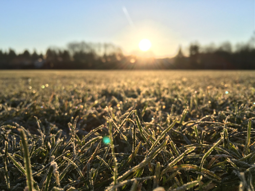 A while ago  #sunrise #grass #frozengrass
