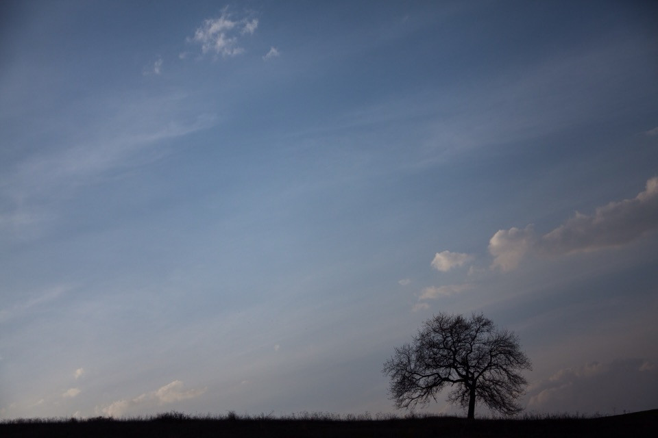 #freetoedit #photography #nature #tree #alonetree #clouds #gradient