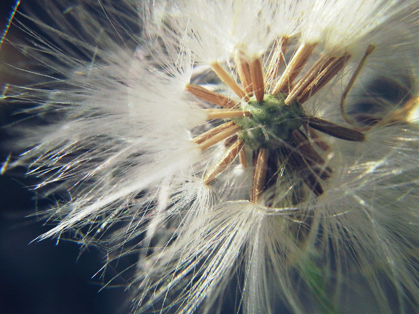 #macro #fantasy  #photography #photo #nature #beautiful #art #memories