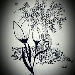 blackandwhite drawing flower nature
