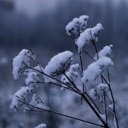 nature seasons freetoedit