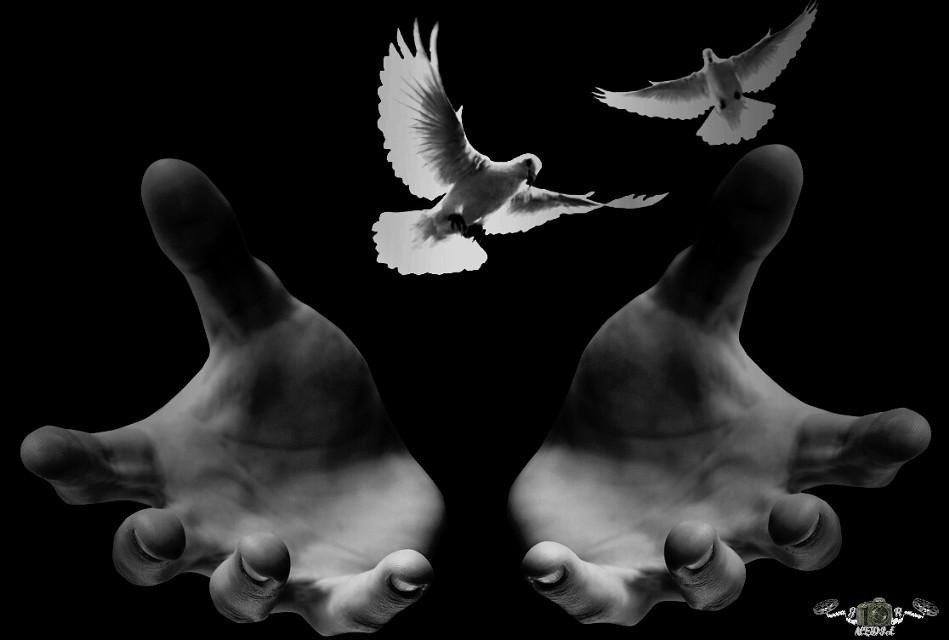 Settimg the birds free #people #petsandanimals #nature #blackandwhite #photography #oldphoto