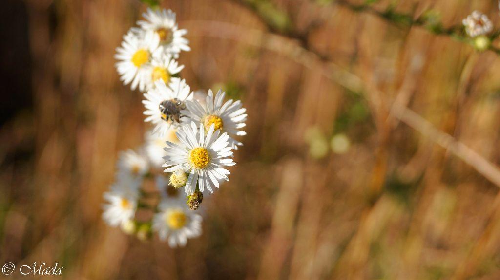 #nature #oldphoto #photography #bokeh #flower #fall #beautiful  #petals #white #bug #flowers #followme