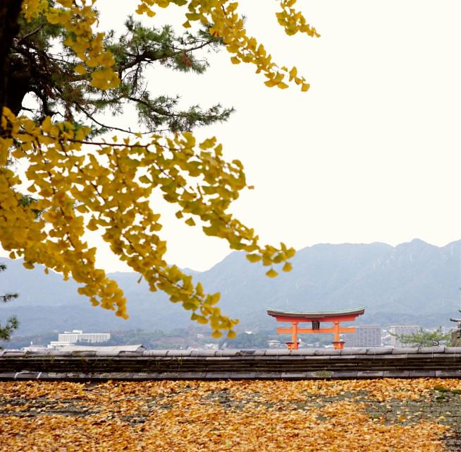 Miyajima #miyajima #japan