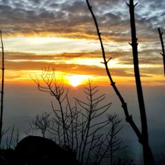 sunrise tree clouds