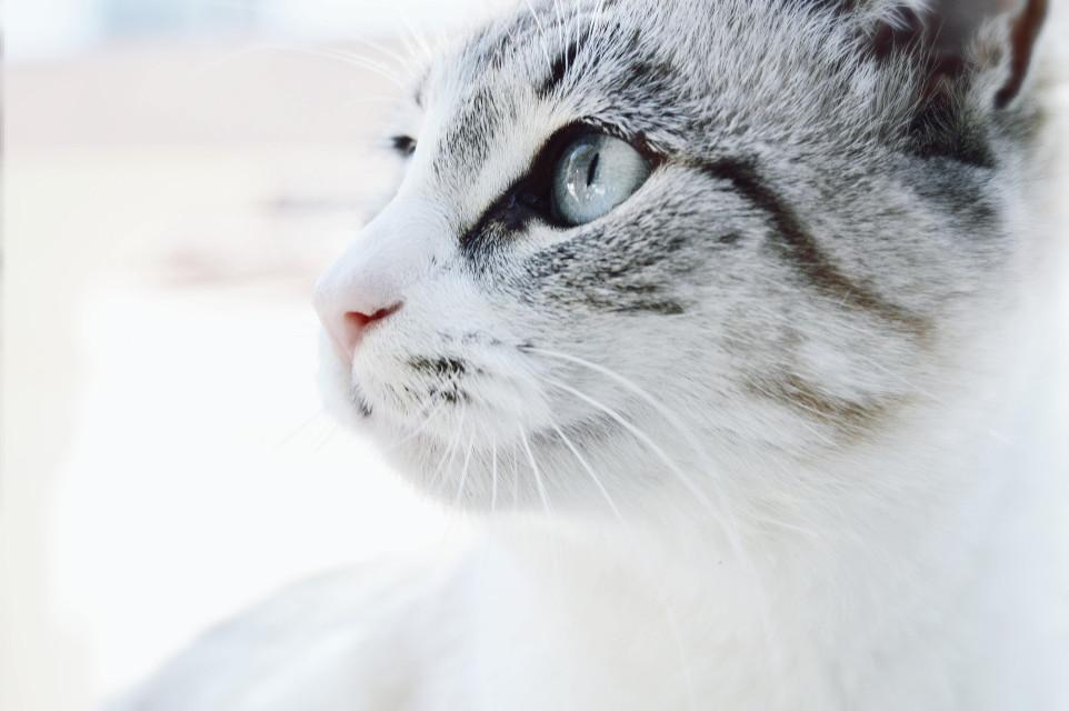 #photography #cat #petsandanimals #white