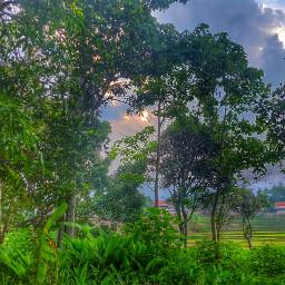 forest sky tree nature like4like