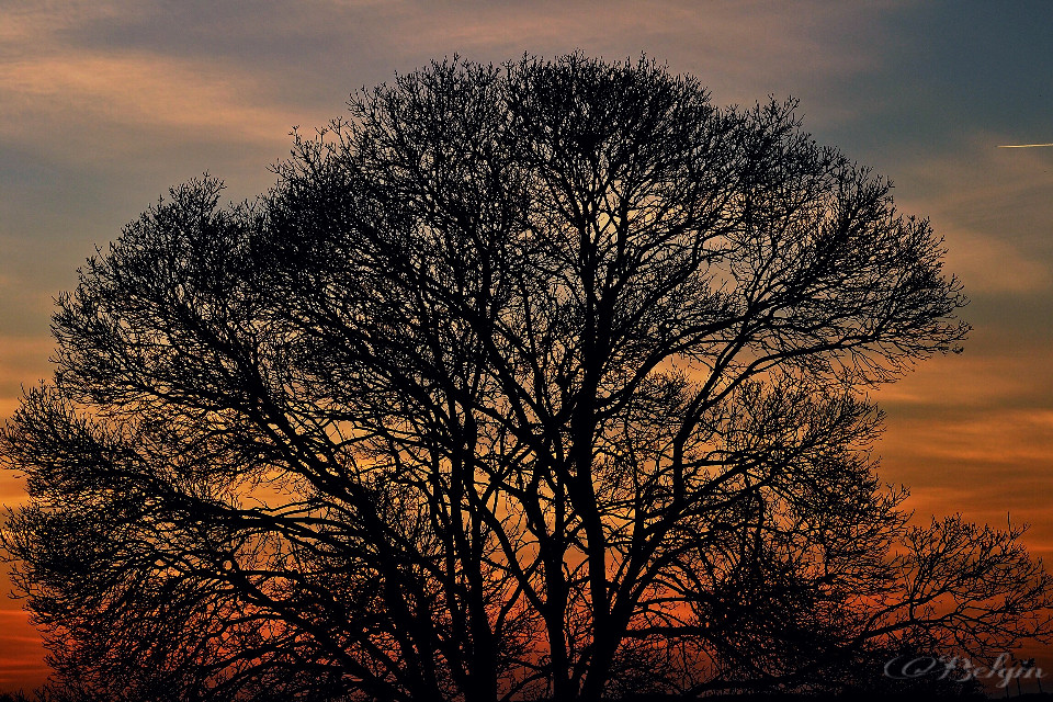 #sunsetcolors #tree #silhouette #photography