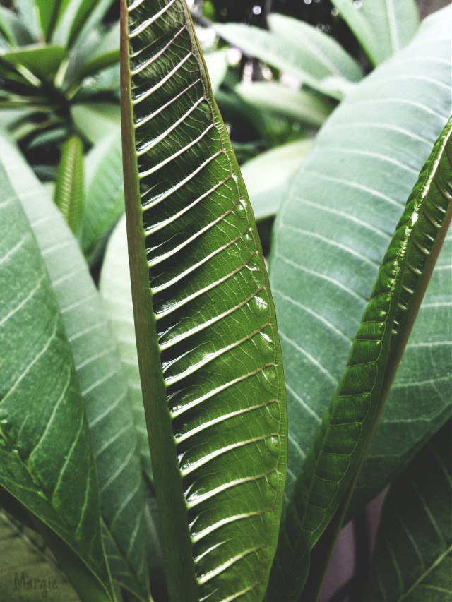 #stripes #leaves
