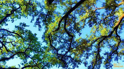 tree freedom