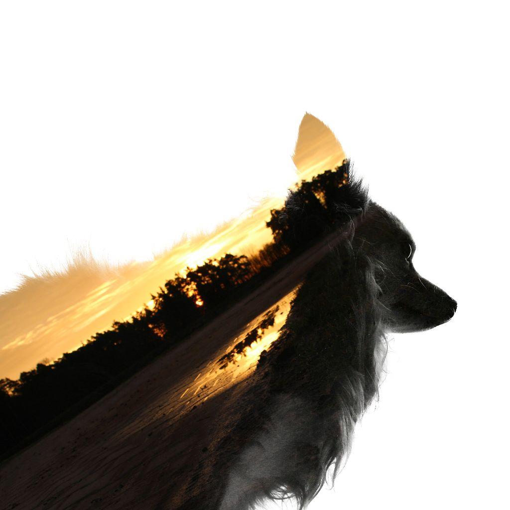 #dog #cute #doubleexposure #sunrise #silhouette #petsandanimals