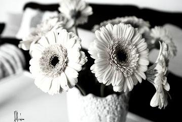 white flowers interior
