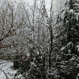 blackandwhite freetoedit nature photography snow