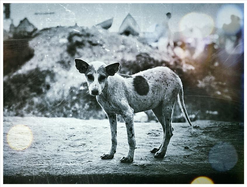 Alone    #petsandanimals #beach #emotions #retro #travel #india #kerala #nikon #d5100 #puppy #dog #bokeh #lightmask #sad #dog #alone #lost