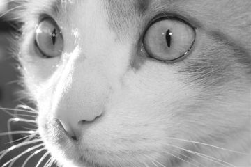 cat eye eyes light luce