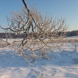 winterday white nature