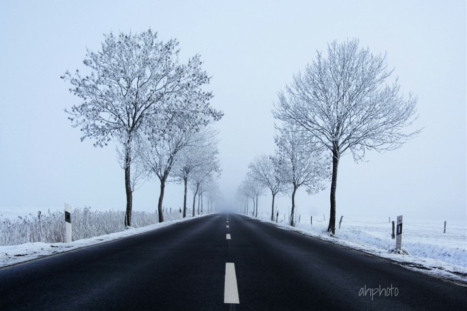 Foggy day... 😄❄🚗  #fog #winter  #trees #road #nature #snow #nobody #photography
