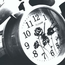alarmclock flower blackandwhite